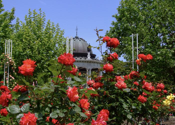 赤いバラの向こう側に見える鶴舞公園奏楽堂
