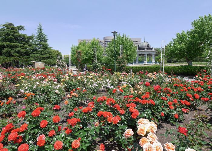 満開の赤いバラと奏楽堂。鶴舞公園で撮影