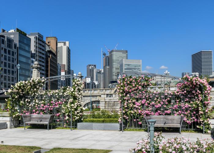 満開のつるバラとベンチと高層ビル群。中之島公園 バラ園で撮影