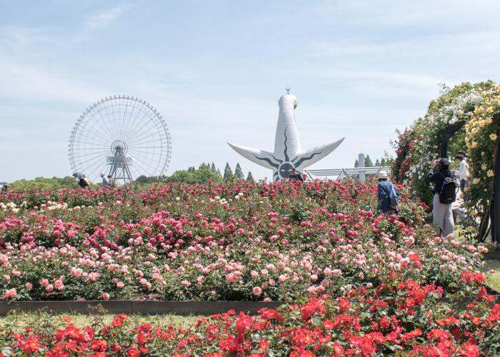 大阪府のバラ園。万博記念公園の平和のバラ園