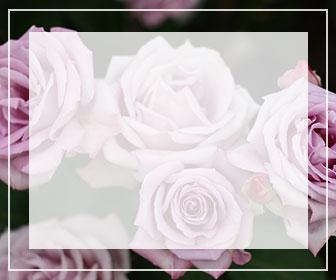 紫のバラ一覧ページへのバナー