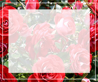 赤いのバラ一覧ページへのバナー