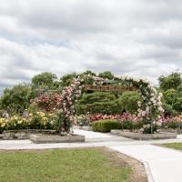 湖南浄化センターのバラ花壇