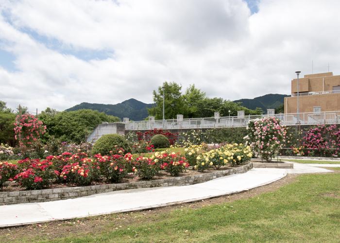 湖西浄化センターバラ花壇