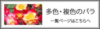 複色・多色のバラの一覧ページへのバナー
