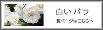 白いバラの一覧ページへのバナー