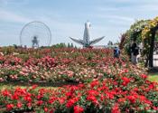 万博記念公園 平和のバラ園(大阪府吹田市)