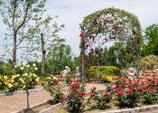 花博記念公園鶴見緑地 バラ園(大阪府大阪市)